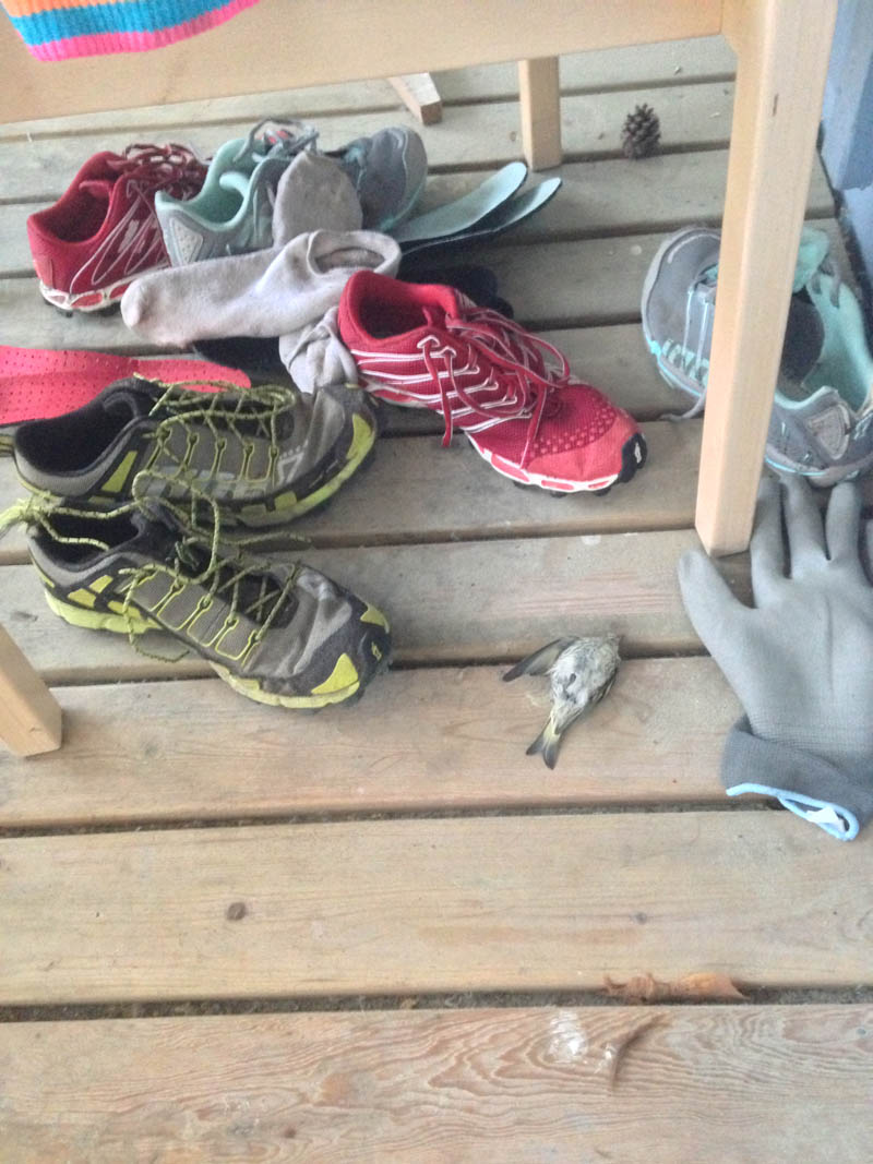 Even Inov-8 shoes smell bad if you run them through marshes, but bad enough to kill a bird?
