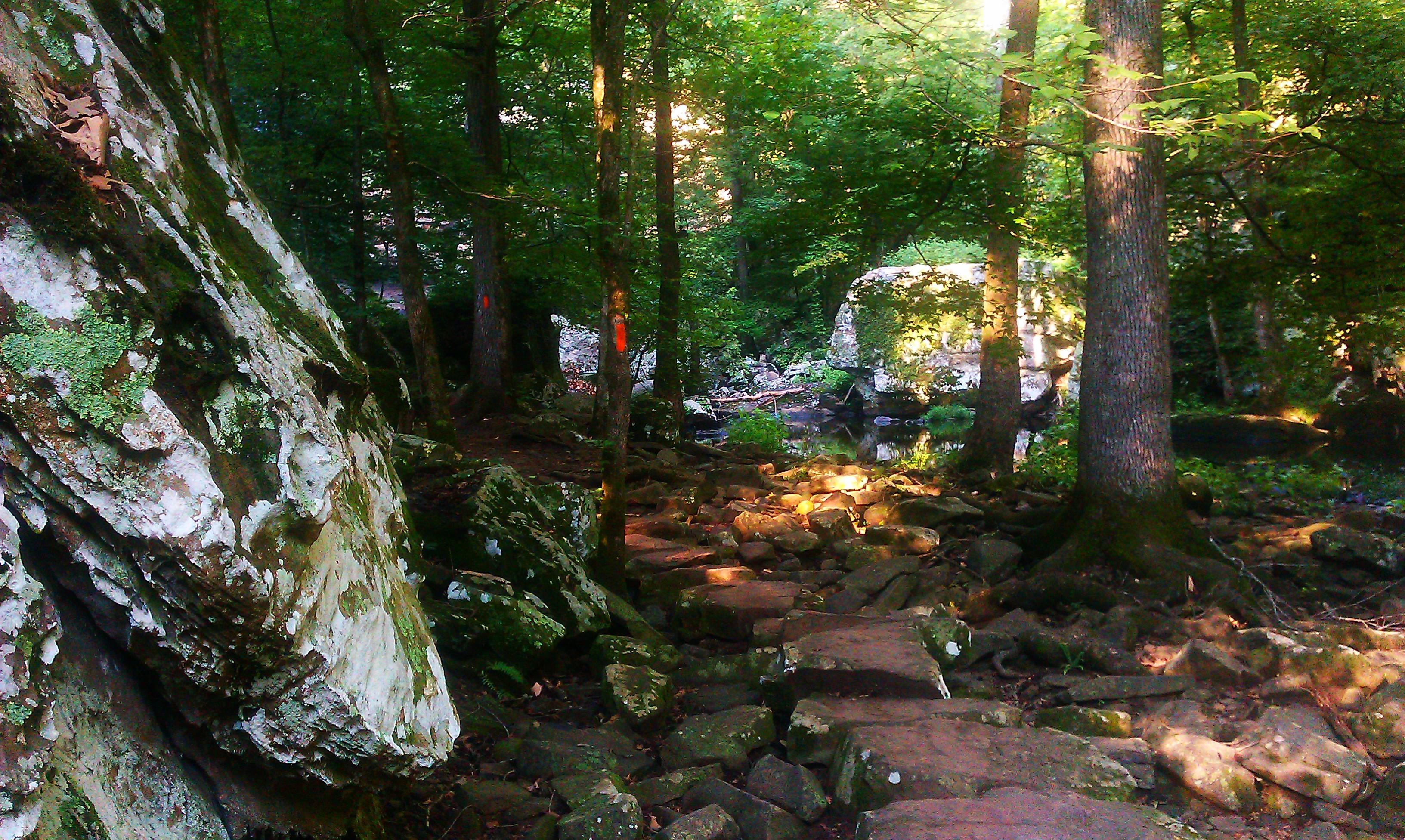 Michele Hartwig Rocks